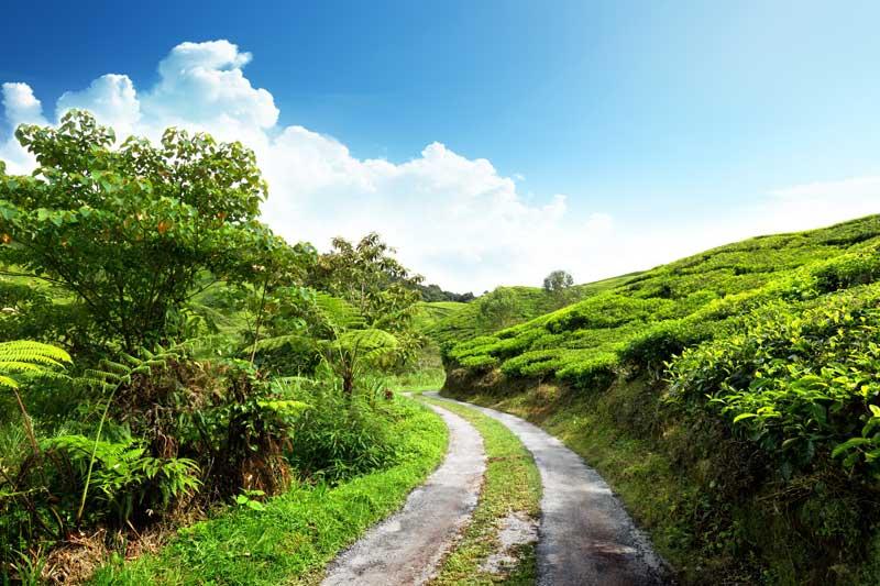 Greenery Roads